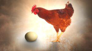 Composting kit – Chicken or Egg